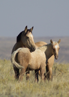 Wild Mare-Foal